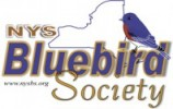 NYS Bluebird Society Annual Membership Meeting @ Town of Chenango Community Room