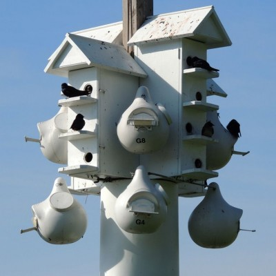 Purple Martin apartment. Photo by John W. Iwanski (*See notes)