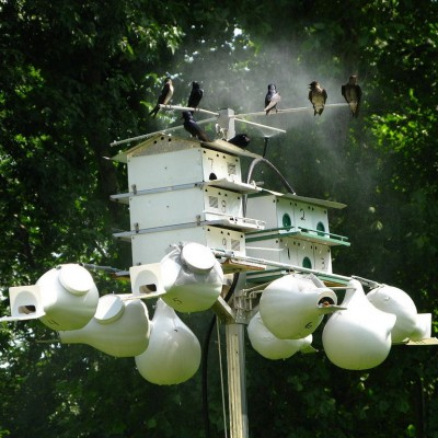 Purple Martin colony, misting in progress. Photo by OakleyOriginals (*See notes)