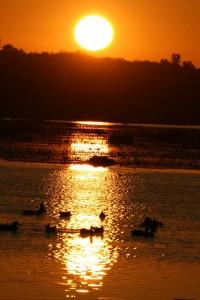 Montezuma_duck_sunset