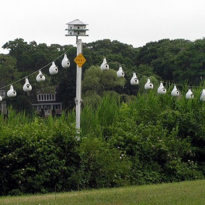 Purple Martin Sanctuary. Photo by Jackie *(See note)