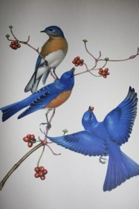 Cortland, Cortland County - Eastern Bluebird Class 101 @ Cortland Free Library | Cortland | New York | United States