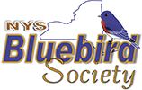 Annual Fall Meeting of the New York State Bluebird Society @ Albany Pine Bush Preserve Discovery Center
