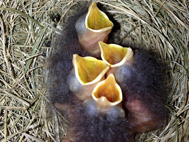 Talbot-4 chicks