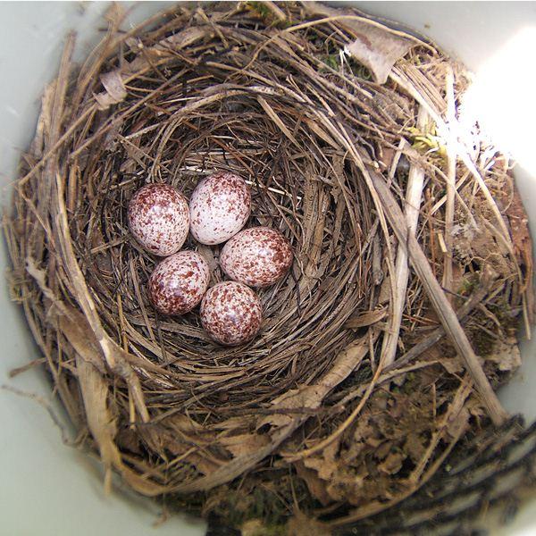 Tuttle PROW eggs